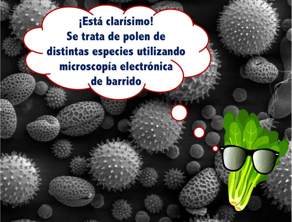 Imágenes citológicas/ histológicas - Práctico Oposiciones Biología-